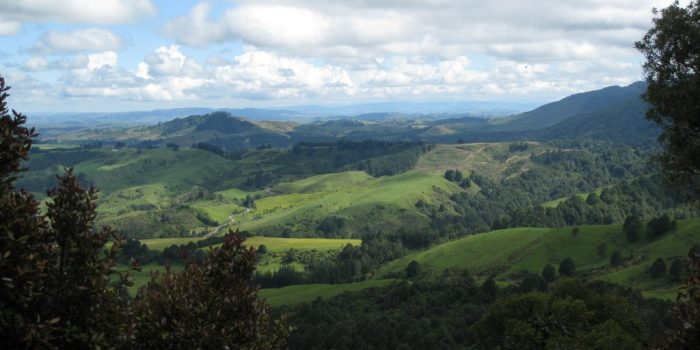 Ruahine Forest Park New Zealand