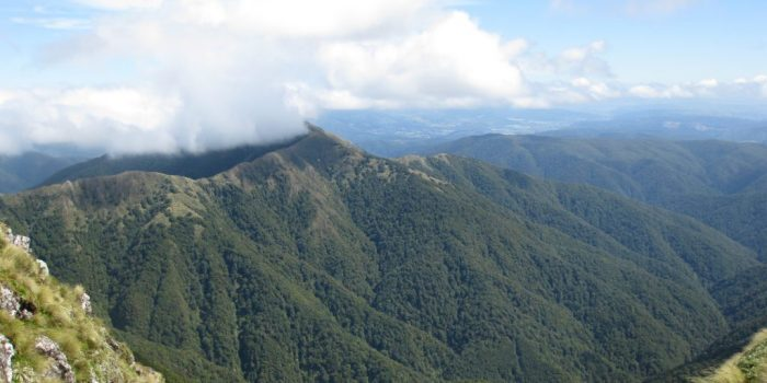 Tararua Forest Park New Zealand